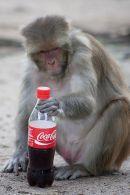 Berliner Charité ließ sich von Coca-Cola mit 1 Million Eurosponsern