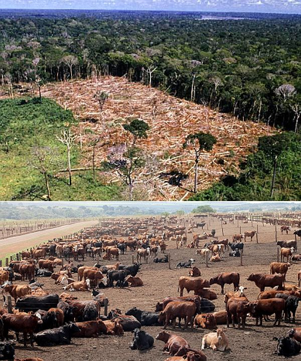 abholzungrinder