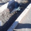 Ukrainisches Flugzeug im Iran wurde wohlabgeschossen