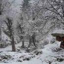 Strauchritter Modi auf Stromklau in Kaschmir im Jahrhundertwinter