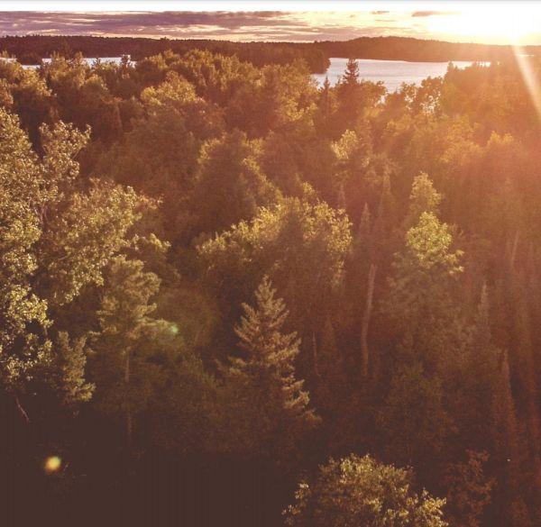Der positive Einfluss der menschlichen CO2-Emissionen auf das Fortbestehen des Lebens auf der Erde